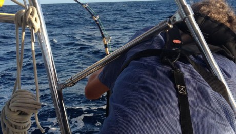 Bei über 7kn Fahrt unter Wingaker ein riesen Fisch an der Angel